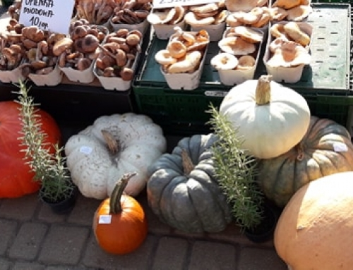 Targ pietruszkowy! Ekologiczny targ w Krakowie